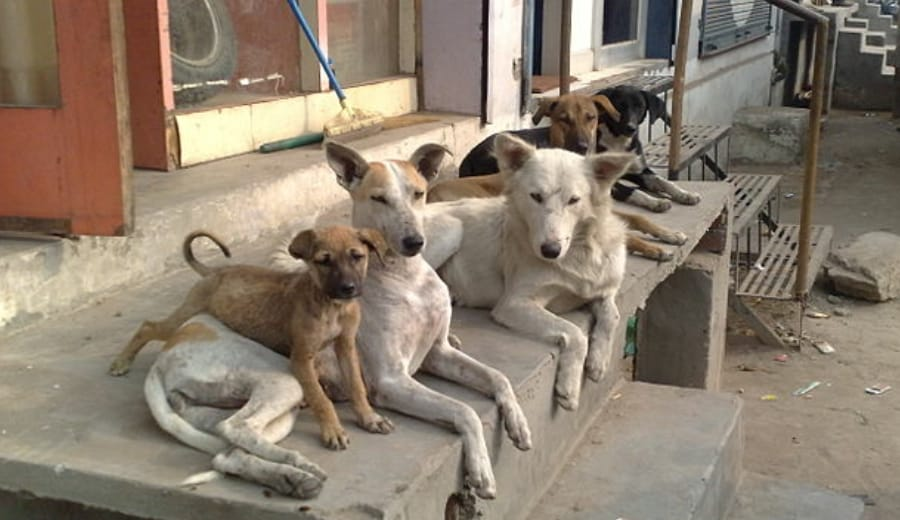 'Hero' street dogs save Argentinian girl from rape