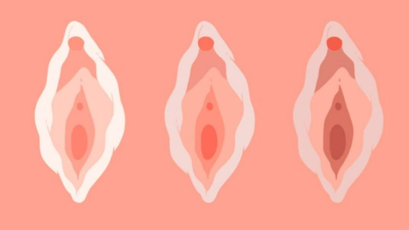 All about VAGINA'S!!