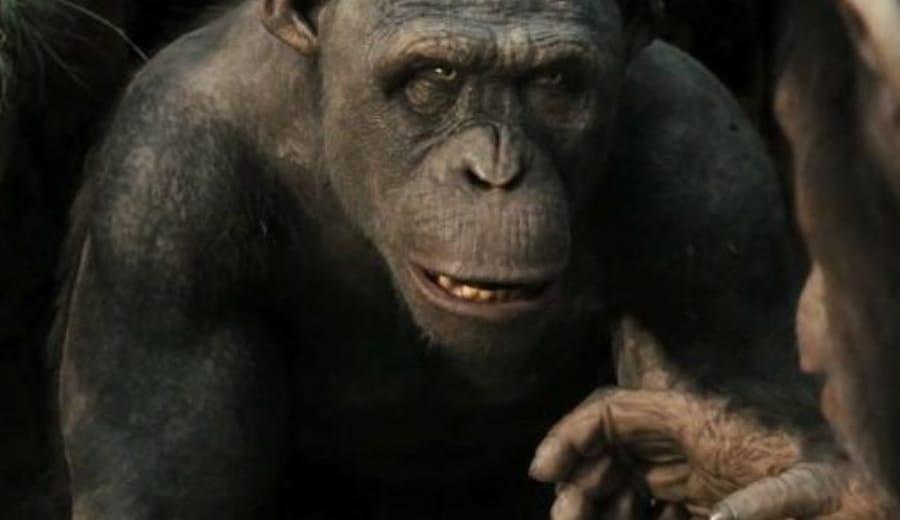 The Evolved Ape