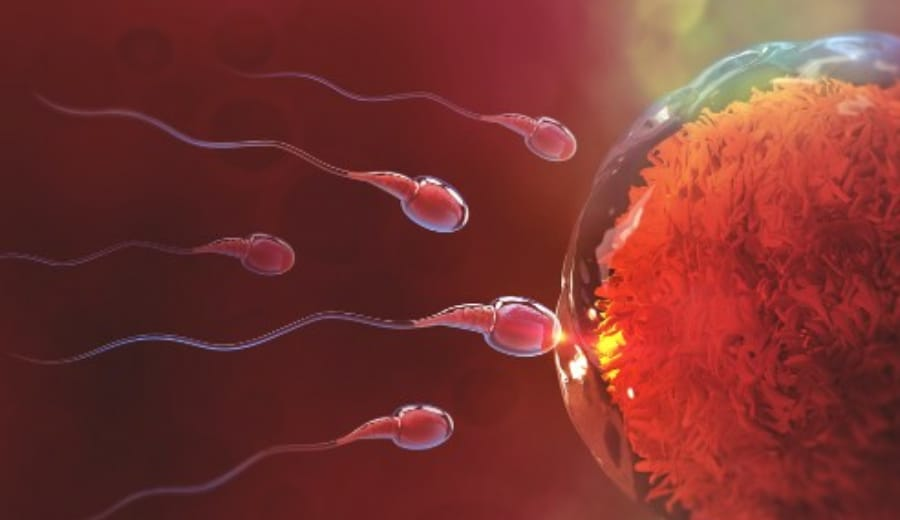 The Egg and The Sperm – A Scientific Fairytale